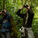 Grab your binoculars: It's Christmas Bird Count season in Costa Rica!