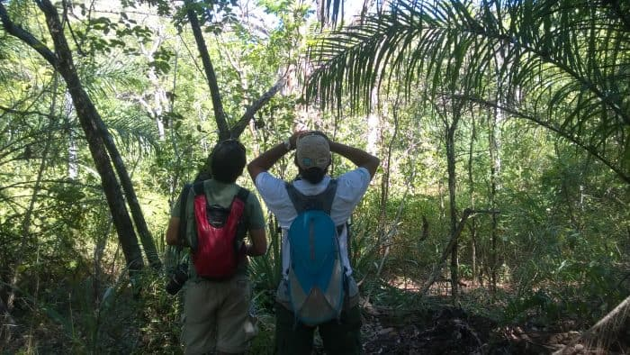 Birders in Guanacaste looking up