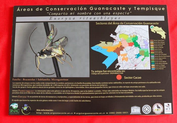 Plaque dedicating wasp species to Rita Ashley