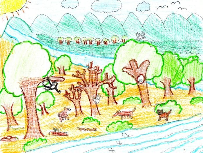 Child's drawing of a tropical dry forest