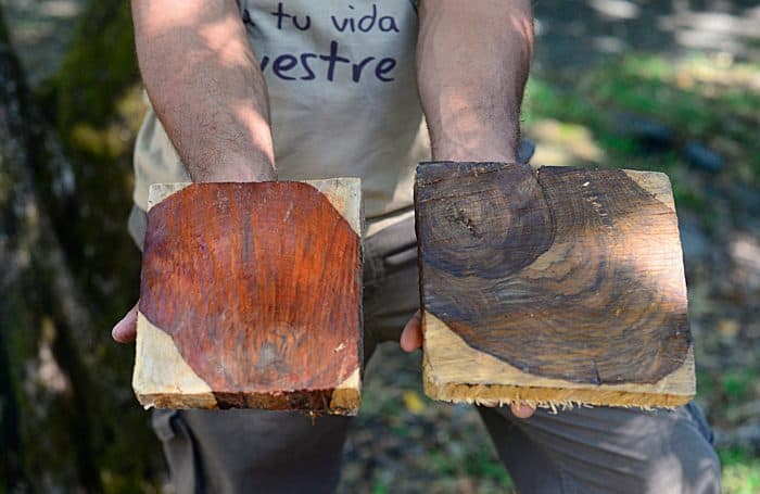 Josué Sandoval holds blocks of cachimbo and cocobolo