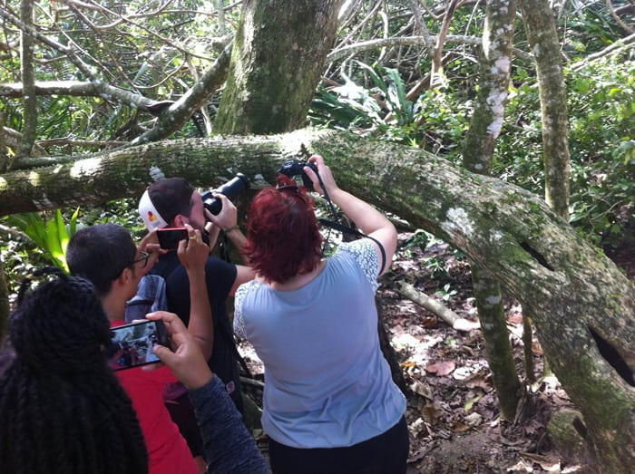 Taking pictures of leafcutter ants.
