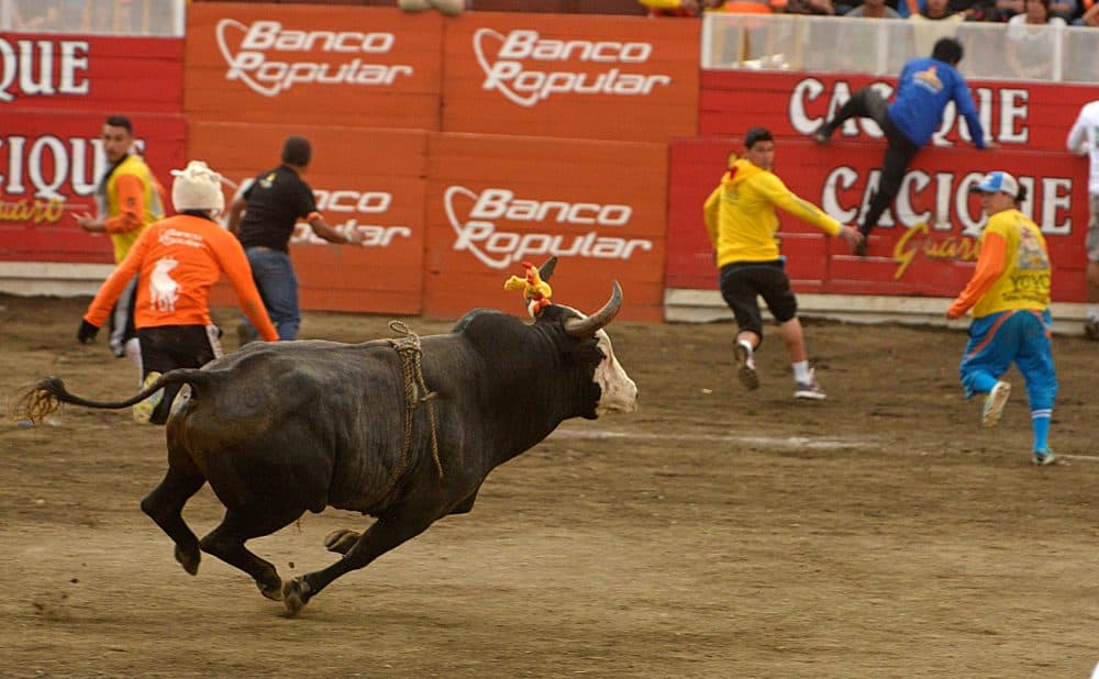 Costa Rica festivals: Bulls