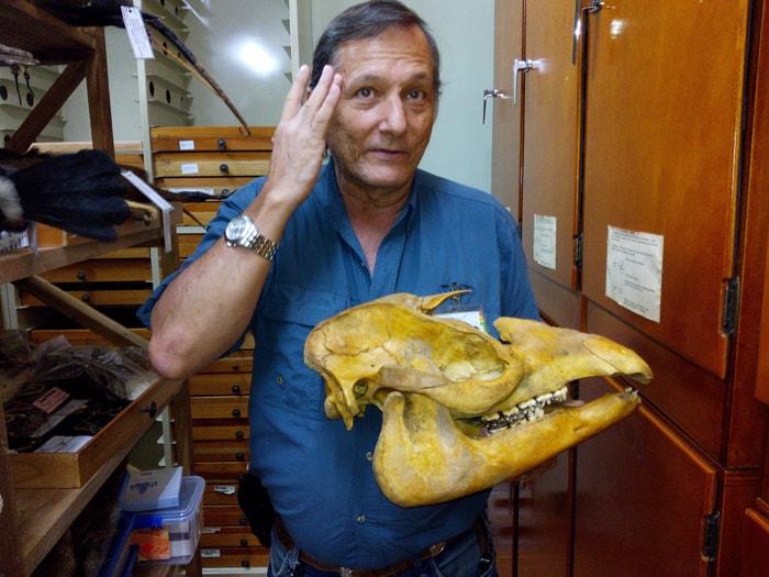 Carlos de la Rosa with a tapir skull.