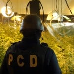 Costa Rica police arrest 2 US suspects in hydroponic pot bust
