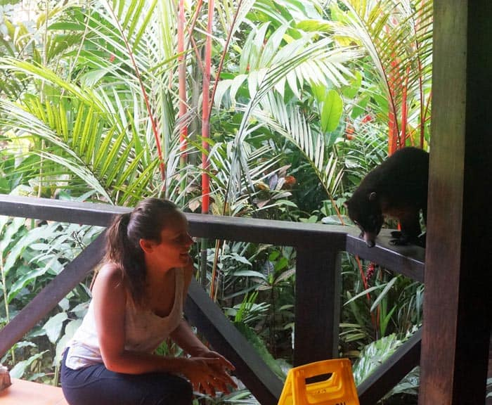 The author gets up-close with a coati.