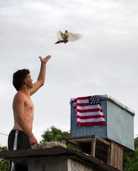 Cuba pigeon