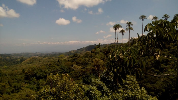 View from the 15-meter observation tower at Las Cruces Biological Station and Wilson Botanical Gardens.