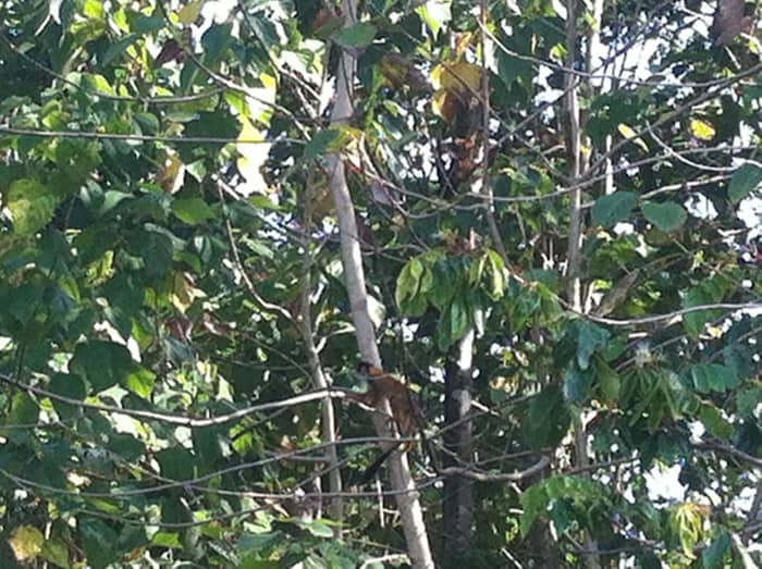One of several squirrel monkeys is visible at low center.