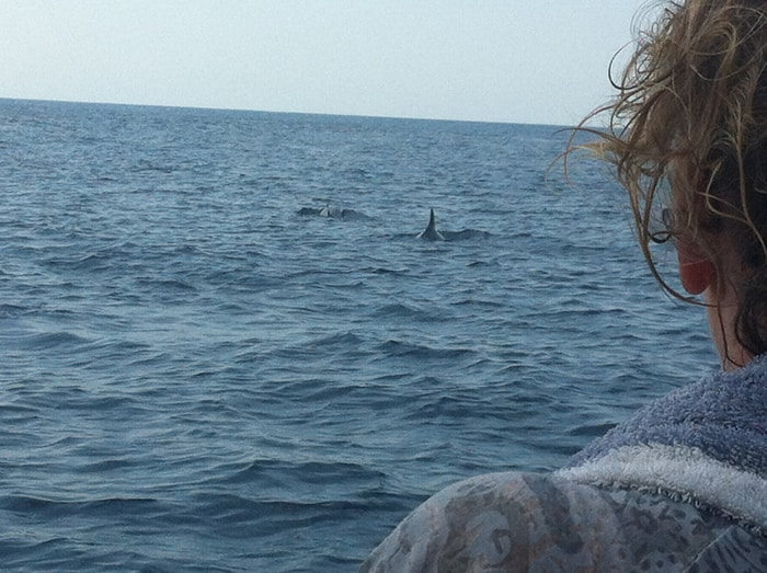Shark!? Relax, just false killer whales.