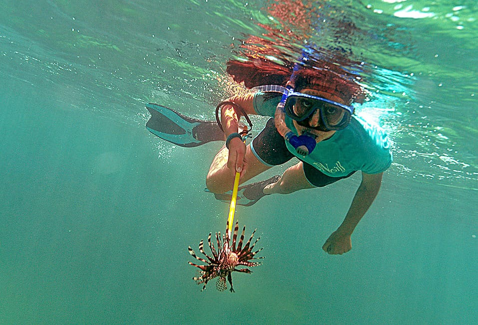 spearing a lionfish
