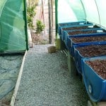 A multitasking garden: setting up aquaponics at home