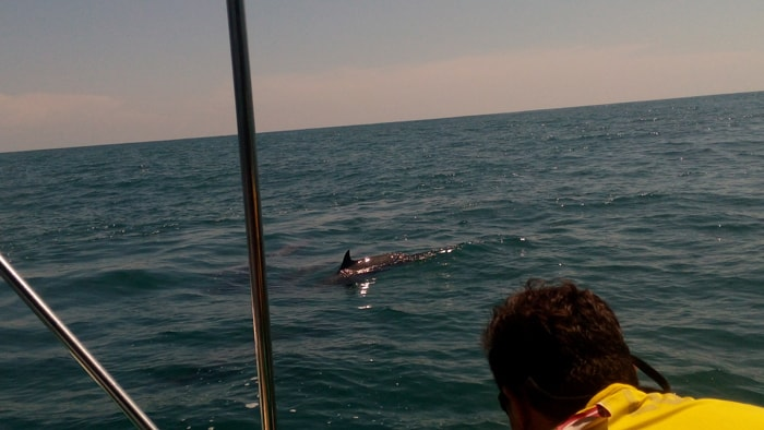 A dolphin surfaces next to our boat.