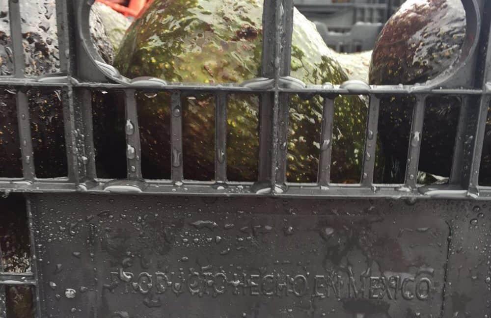 Mexican Hass avocados