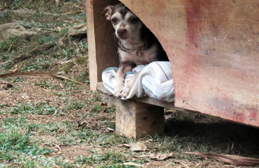 Animal Welfare Bill