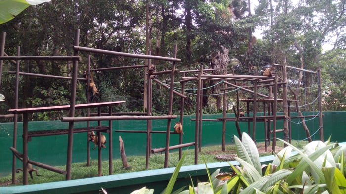 "Spider monkeys have a sort of ""jungle gym"" in their enclosure, but no trees."