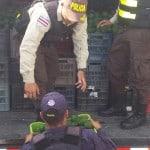 Police seize 20,000 contraband avocados at Panama border