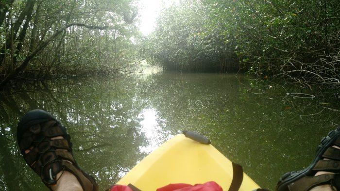 Nosara mangroves