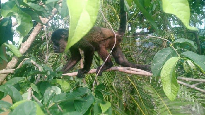SIBU Costa Rica