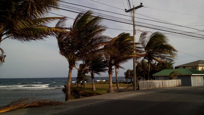 Wind-blown palms along the Roatán coast.