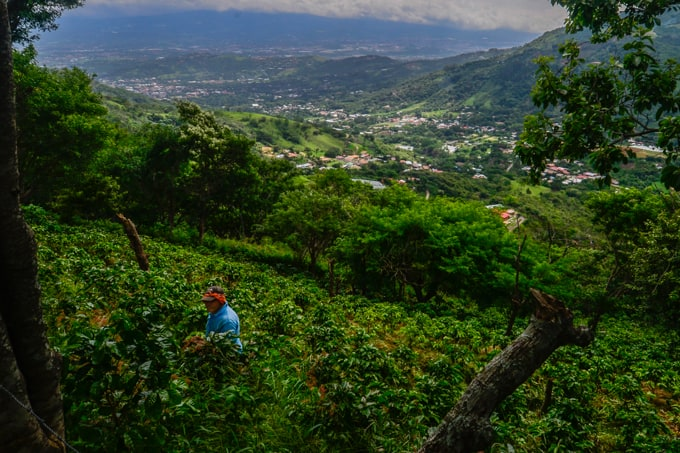 A coffee farmer weeds the fields on a mountainside overlooking Valle del Sol.