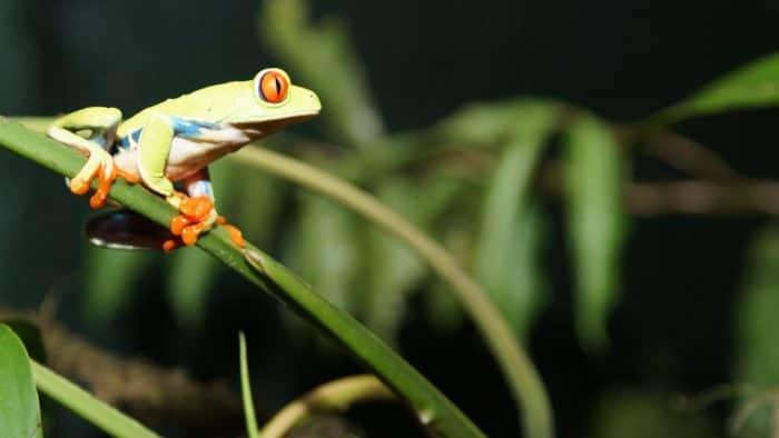 Rainforest Adventure Tree Frog