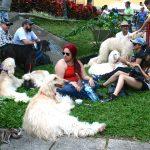 animal welfare march