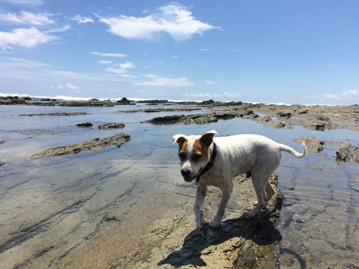 Our dog Kai loves the tide pools in Playa Hermosa.