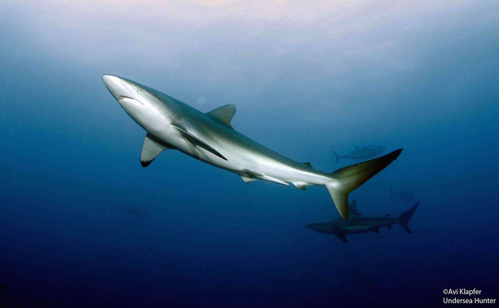 Costa Rica shark conservation