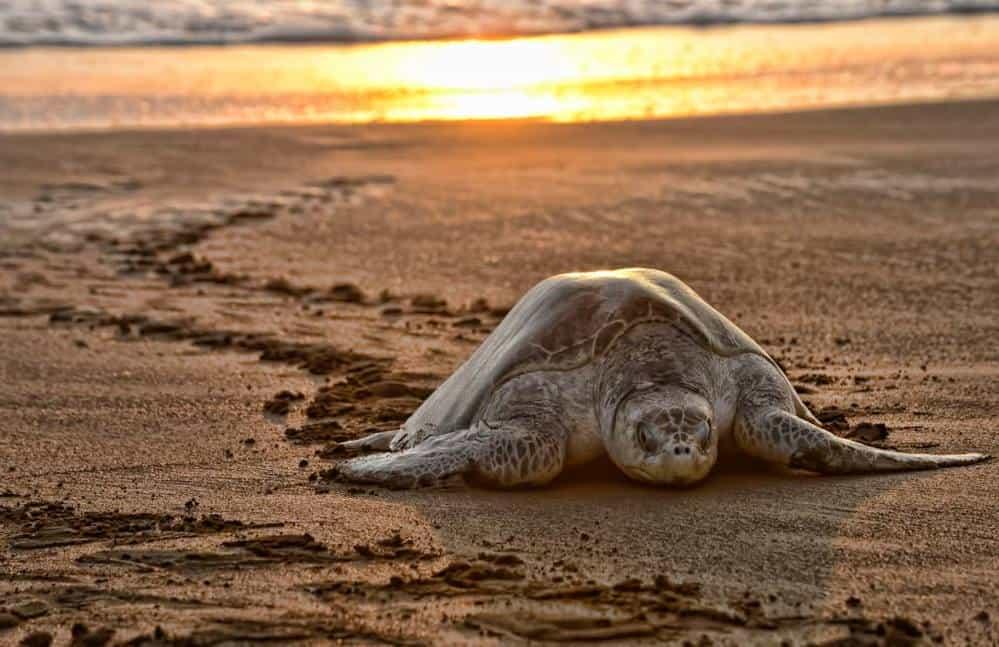 Sea Shepherd Costa Rica