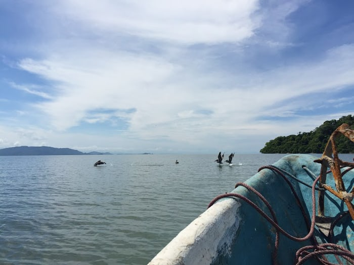 Some pelicans spotted during the 45-minute boat ride from Puntarenas to Isla de Chira.