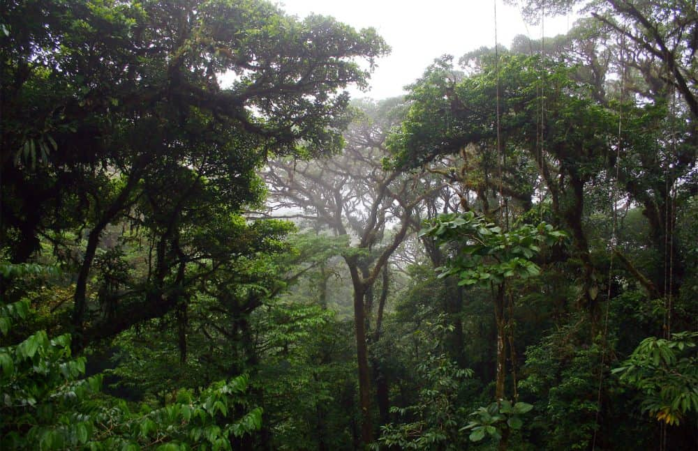 Climate change, cloud forest in Costa Rica
