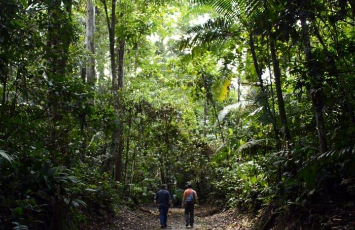 La Selva Biological Station. Sarapiquí, Heredia.