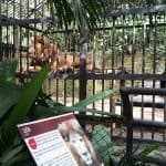 Officials demand the removal of Kivú the lion from public display