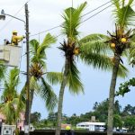 Images of Hurricane Otto's Thursday impact