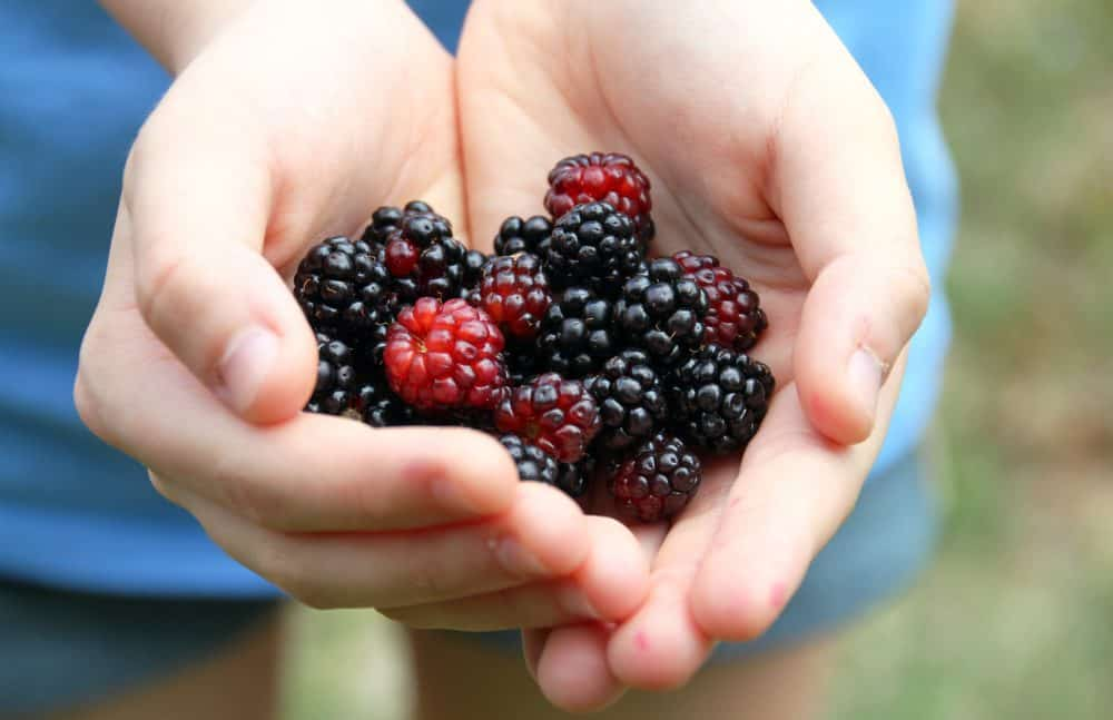 Blackberries, cancer research