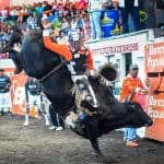 Tico-style bullfights: some call it animal abuse, others a tradition