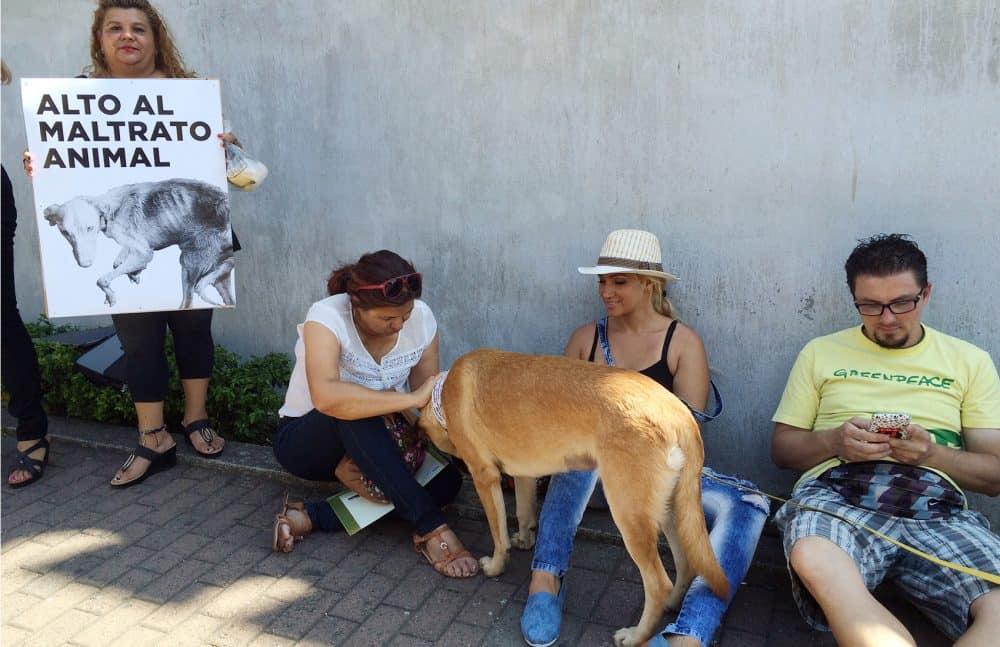 Animal welfare bill demonstrations