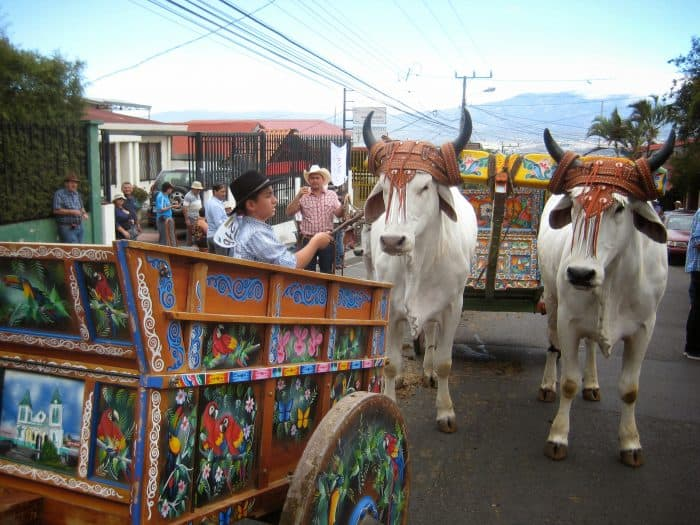 The vibrant oxcarts and stately oxen grace the streets on the second Sunday in March, on the annual Día del Boyero.