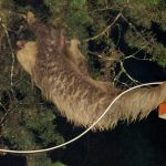 From a Tico Times reader: a close encounter of the slothful kind