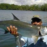 Tarpon in the Pacific? Are there illegal aliens among us?