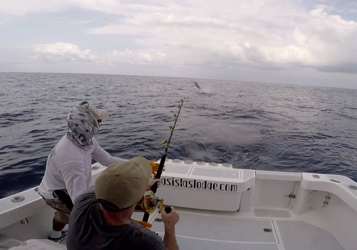 A 200-pound marlin goes airborne in the Pacific Ocean off the Golfo Dulce as the author struggles to reel it in.
