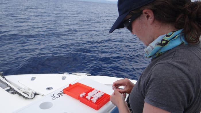 Beatriz logs a tissue sample taken from a sailfish.