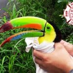 Toucan dies after being shot with BB gun
