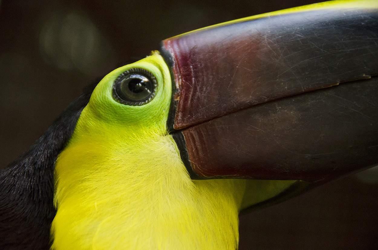 A toucan in Costa Rica