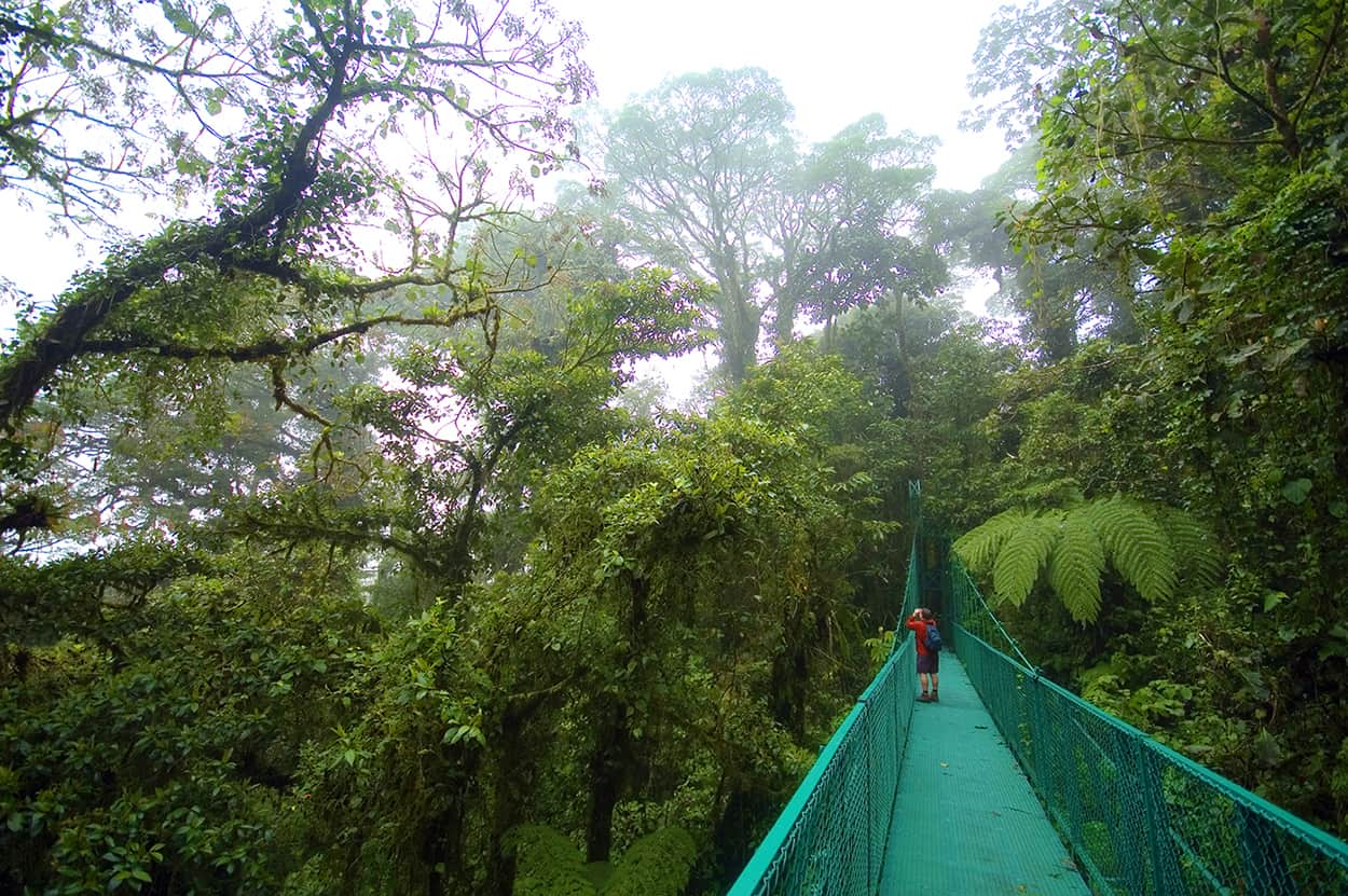 A skywalk in Monteverde, Costa Rica.