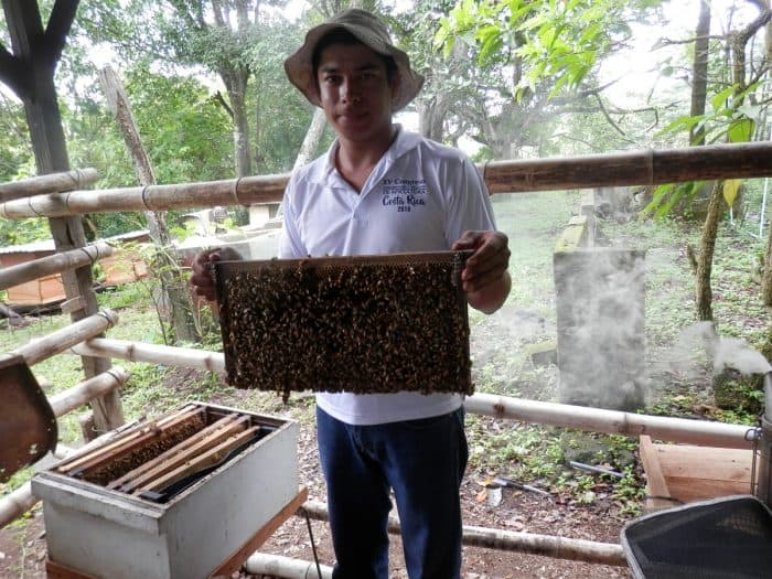 Costa Rican beekeeper Kenneth Morera with a frame of bees.